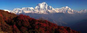 Ghorepani-Poon-Hill-Trek1